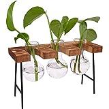 DEDC Jarrón de cristal para mesa con soporte de madera maciza retro para plantas hidropónicas, decoración de boda (3 bombilla