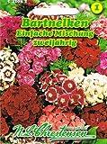 Dianthus barbartus Bartnelken einfache Mischung Büschelnelken
