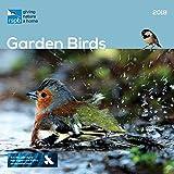 Rspb British Garden Birds 2018 W (Square)
