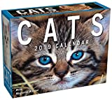 Cats 2019 Mini Day-to-Day Calendar