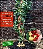 BALDUR-Garten TomTato® 1 Pflanze Tomaten und Kartoffeln an einer Pflanze Tomoffel Tomatoffel
