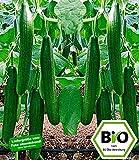 BALDUR-Garten BIO-Salatgurke 'Bella' F1,2 Pflanzen BIO Gurkenpflanze