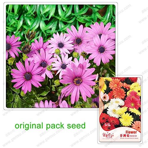 20 semi / pack, margherite gerbera, gerbera terrazza nel cortile miscelazione facile da coltivare piante in vaso semi di fiori