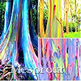 SwansGreen 100PCS/BAG rare Rainbow Eucalyptus deglupta seeds,bonsai tree seeds potted Courtyard plant for home garden send you gift