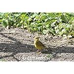 Erdtmanns Hemp Seeds, 2.5 Kg 9