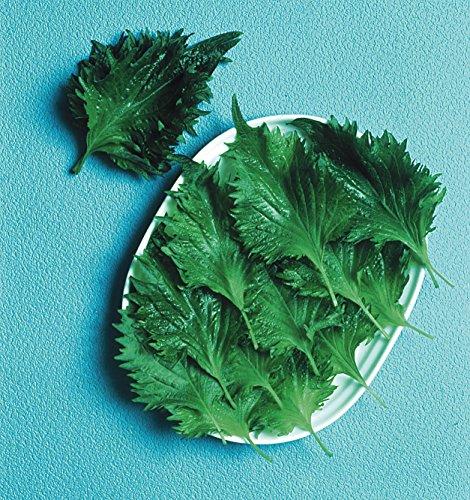 Just Seed Salat PERILLA Shiso gr n 150 Samen Wirtschaft Pack