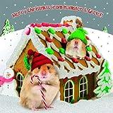 Weihnachtskarte - Gingerbread House - Hamster