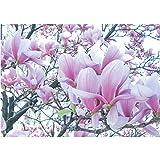 Vlies Fototapete PREMIUM PLUS Wand Foto Tapete Wand Bild Vliestapete - Natur Blume Magnolie - no. 1214, Größe:312x219cm Vlies
