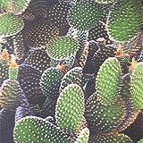 Tela por metros de loneta resinada - Mantelería antimanchas - 140 cm ancho - Largo a elección de 50 en 50 cm | Cactus