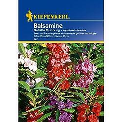 Fleissiges Lieschen gefüllte Mischung Impatiens balsamina Balsamine