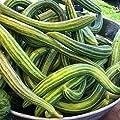 Plantree 250 Samen oder 1/4 Oz: Gurke, armenischer Hof, Schlangenmelone, Nicht-GVO, Sortengrößen, Burpless von Generic auf Du und dein Garten