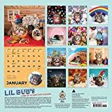 Image de Lil Bub 2017 Calendar