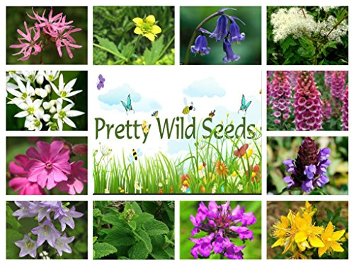 10g-pure-meadow-wild-flower-seeds-woodland-hedgerows-shade-areas-bulk-mix-2