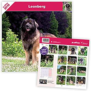 CALENDRIER 2016 LEONBERG AFFIXE EDITION