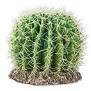Hobby 37007 Kaktus Sonora, L