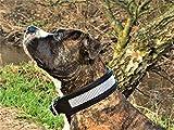 Leder Halsband Hundehalsband Glitzer Lederhalsband Sally Schwarz Leder Breit ! Tysons Art Strass (XL)