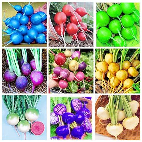 Bloom Green Co. Cherry Belle Radis Bonsai haute qualité facile à cultiver des légumes bio Bonsai extérieur Cache-pot pour Accueil Jardin 50 Pcs/Sac: MIX