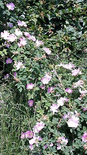 Pflanzen-Discounter24.de b21700002-3