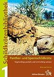 Panther- und Spornschildkröte (Stigmochelys pardalis und Centrochelys sulcata)
