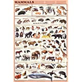 Laminated Mammals Educational Animal Chart Poster Laminated Poster 24 x 36in by Poster Revolution