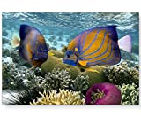 Leinwandbild 120x80cm Korallenriff mit tropischen Fischen – Rotes Meer