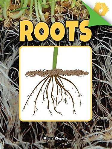 Roots (A Closer Look at Plants) (English Edition)