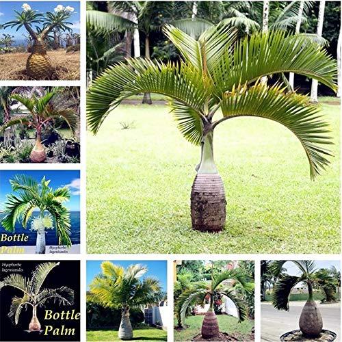 HATCHMATIC Jaune Clair: 100 pcs/Sac Bonsai Four Seasons Echalote Graines Jardin Vert légumes Bio Voir