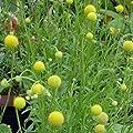"""Blumensamen """"Gummibärligarten"""" im Geschenkkarton von Naturkraftwerk e. U. - Du und dein Garten"""