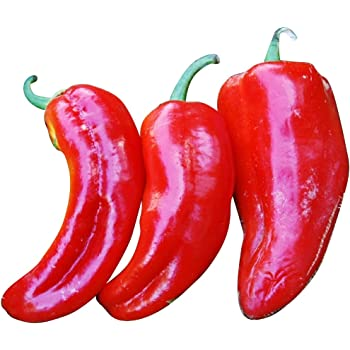 Süßpaprika Quadrato d/'Asti Rosso Paprika 20 Samen