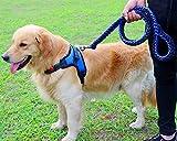 Manco Luella Hundegeschirr mit Hundehalsband, sehr robust, handgefertigt, mit Metallclip, verstellbarem Halfter und geflochtenem Martingal, Hundehalsband