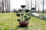 Formgehölze, Outdoor-Bonsai - Ilex crenata 'Convexa' - Garten von Ehren®