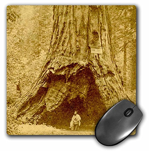 3drose Mauspad Mammutbaum CALAVERAS Big Trees State Park California Pioneer Kabine, 20,3x 20,3cm (MP 270008_ 1) -