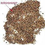 Pinkdose2018 Vendita Calda Davitu Nero Goji Qinghai Heirloom Erbe Semi, 20 Semi, Confezione Professionale, Gustoso Nespola Biologico E43247