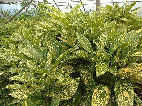 Jean Huchet Plantes - Arbre fruitier Kit de massif ombre/terre de bruyère 15 plantes 8227