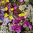 Wild Flower Mix - Honey Bee Mixture Seeds