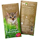 PRETTY KITTY Premium Katzengras Samen: 1 Beutel mit 25g Saatmischung für 10 Töpfe fertiges Katzengras zum Naschen - eine grüne Katzen Wiese mit 1x25g Katzengrassamen, Katzen Geschenk - Pflanzen Samen