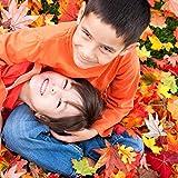 Herbst Dekoration Ahornblatt, Muscccm 400 Stück Verschiedene gemischte Herbst farbige künstliche Ahornblätter für Hochzeiten, Thanksgiving, Veranstaltungen und Outdoor Maple Leaf Cafe Dekoration - 5
