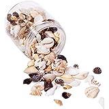 PandaHall Elite - Lot de 1 Boîte Multi-Style Coquillages Spirales Conques Naturels Perles en Coquilles pour Fabrication des B
