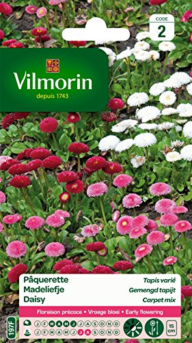 Vilmorin 5448242 Pâquerette, Multicolore, 90 x 2 x 160 cm