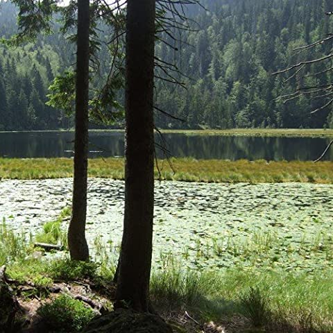Schein buono 2giorni negli foresta bavarese in 4* S Resort Viaggio, la Wutz–Fiocco