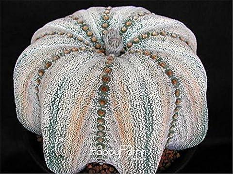 20 PC / Beutel hoya Samen, hoya Pflanze, Ball Orchideensamen, seltene Bonsai Blumensamen, Natürliches Wachstum Topf für zu Hause Garten Bepflanzung
