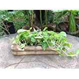 The Garden Store Bamboo Table Planter