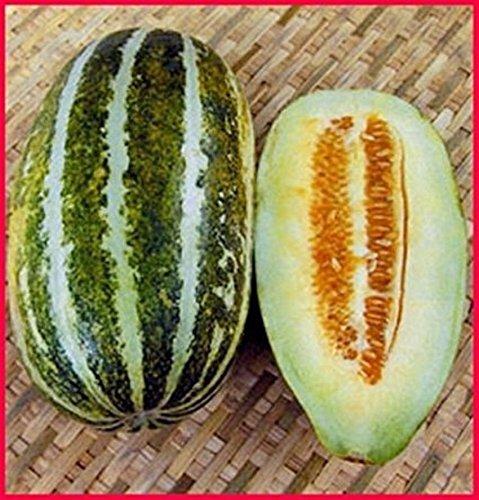 Portal Cool Long Green Thai Moschus Melonen- Muskmelon 20 Samen -