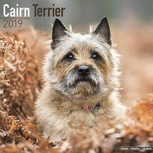 Cairn Terrier Calendar 2019 (Square)
