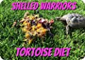 Shelled Warriors 100g DRIED Tortoise Diet 100% natural ready to feed food 20g by Shelled Warriors