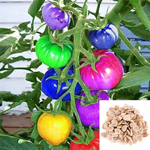 Portal Cool 200X Regenbogen Tomatensamen Bunte Bonsai Bio-Gemüse-Samen-Hausgarten-Fe