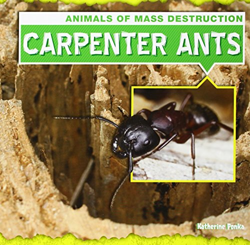 carpenter-ants-animals-of-mass-destruction