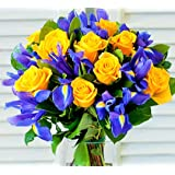 Flowers Delivery Next Day Fresh Yellow Roses and Blue Iris Bouquet Delivered for Anniversary Birthdays and Thank You Gifts Fl