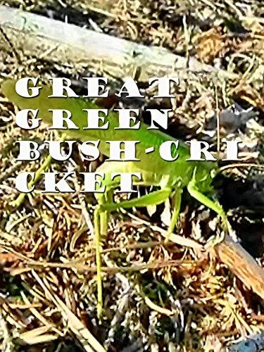Great Green Bush-Cricket [OV] Cricket Green