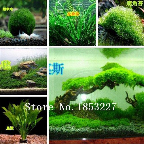graines aquarium d'herbe de vente chaude de graines d'herbe (mix) des plantes aquatiques d'eau (15 sortes) de graines famille de plantes faciles